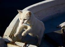 Белый котенок украл рыбу Кот с рыбами в его зубах стоковое фото rf