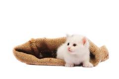 Белый котенок Стоковые Фото