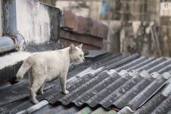 Белый кот идя на крышу дома Стоковая Фотография