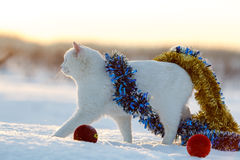 Белый кот на снежке Стоковые Изображения
