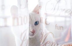 Белый кот на windowsill Стоковые Фото