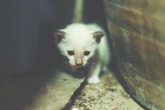 Белый кот пряча на опарнике Стоковые Фотографии RF