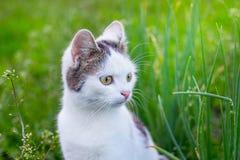 Белый кот сидит в саде среди зеленой травы Портрет close-up_ кота стоковая фотография rf