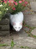 Белый кот 2 стоковое фото rf