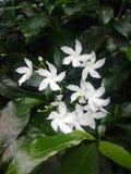Белый красивый цветок на моем доме стоковые изображения