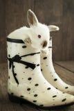 Белый кролик в белом ботинке на деревянной предпосылке Стоковая Фотография