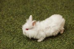 Белый кролик в траве стоковое изображение