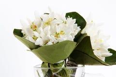 Белый крупный план цветков snowdrops Стоковое Фото