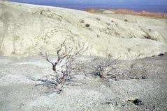 Белый ландшафт пустыни Стоковые Изображения