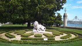Белый лев стоковые фото