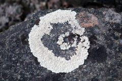 Белый лишайник Стоковые Фото