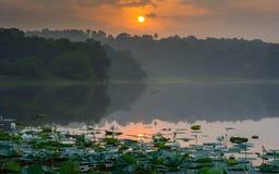Белый лотос и восход солнца захваченные от Ithikkunnu, Padapuzha стоковое фото