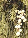 Белый падуб на вечнозеленом венке стоковое изображение rf
