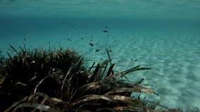 Белый песок в кристаллическом море