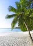 Белый песок коралла и azure индийский океан. Стоковые Изображения RF