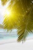 Белый песок пляжа коралла и azure индийский океан. Стоковое Фото