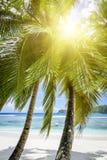 Белый песок пляжа коралла и azure индийский океан. Стоковое Изображение RF