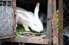 Белый пушистый кролик зайчика в клетке Стоковые Изображения RF