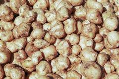 Белый сладкий картофель стоковое фото