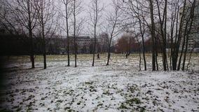 Белый снег и Tress стоковые фотографии rf