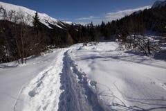 Белый снежок Стоковые Изображения RF
