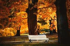 Белый стенд в парке стоковое фото rf