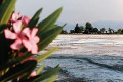 Белый травертин в замке хлопка Pamukkale в Турции Стоковые Изображения RF