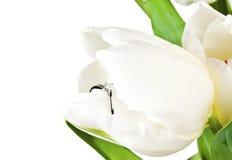 Белый тюльпан весны с кольцом диаманта Стоковые Фото