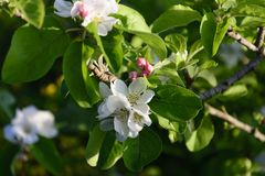 Белый цветок весной Стоковое Изображение
