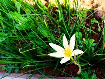 Белый цветок в заводе стоковые изображения rf