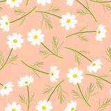 Белый цветок космоса на розовой Salmon предпосылке также вектор иллюстрации притяжки corel иллюстрация вектора