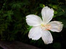 Белый цветок предпосылки лист Стоковое Изображение