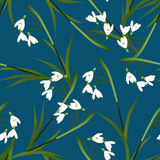 Белый цветок Snowdrop на предпосылке сини индиго также вектор иллюстрации притяжки corel Стоковое фото RF