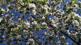Белый цвет весной стоковые фотографии rf