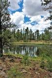 Белый центр природы горы, берег озера Pinetop, Аризона, Соединенные Штаты стоковое изображение