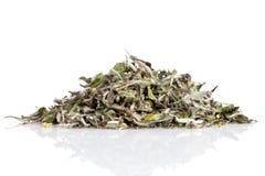 Белый чай стоковые фото