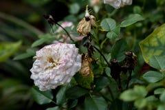 Белый яркий цветок близко к умершим одни стоковое фото