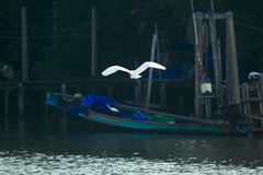 Белый Egret летая над поверхностью стоковое фото