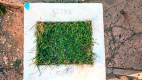 Белый flowerbed с зеленой травой в городе Летний день в городе Стоковые Фотографии RF