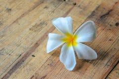 Белый frangipani на древесине Стоковое фото RF