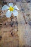 Белый frangipani на древесине Стоковые Фото