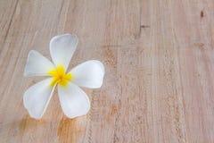 Белый frangipani на древесине Стоковое Изображение RF