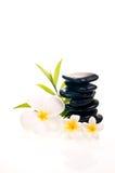 Белый frangipani с черным камнем Дзэн Стоковые Фотографии RF