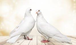 2 белых голубя на woodent предпосылке Стоковые Изображения