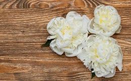 3 белых пиона на деревянной предпосылке Стоковые Изображения RF
