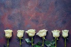 6 белых роз на красивой каменной предпосылке Космос для ярлыка Стоковые Фото