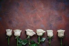6 белых роз на красивой каменной предпосылке Космос для ярлыка Стоковые Фотографии RF