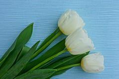 3 белых свежих тюльпана в букете на голубой предпосылке Стоковое Фото