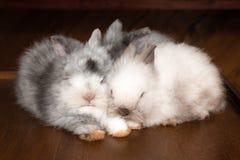 3 белых спать пушистых и серых кролика Стоковое Фото