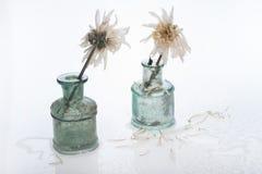 2 белых цветка, влажного, в малых старых зеленоватых маленьких пуках, взгляд на одине другого, метафора ссоры Стоковые Изображения RF